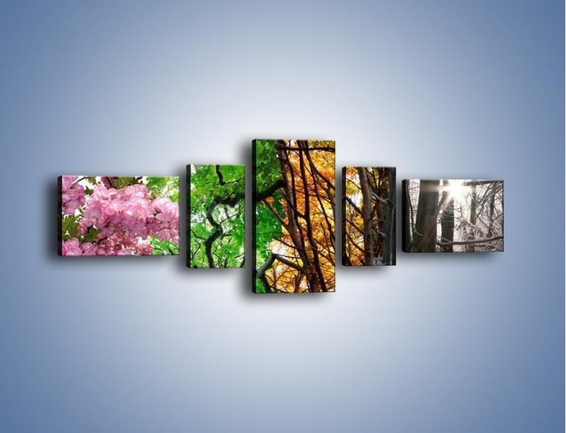 Obraz na płótnie – Drzewa w różnych kolorach – pięcioczęściowy KN037W6