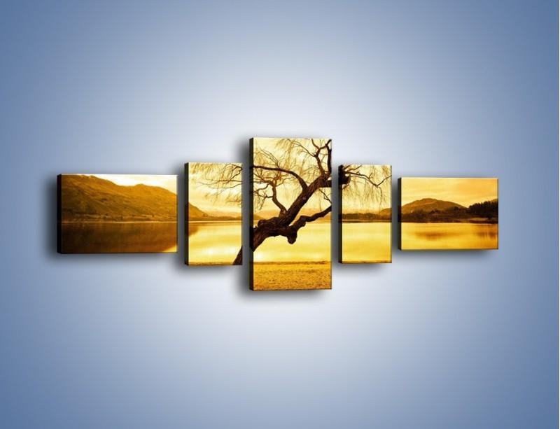 Obraz na płótnie – Pochylone drzewo w sepii – pięcioczęściowy KN1033W6