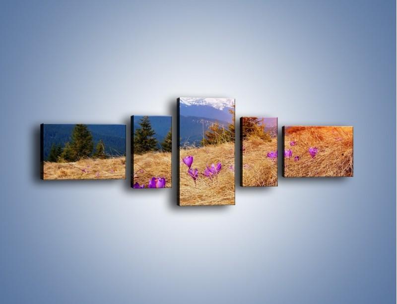 Obraz na płótnie – Przebiśniegi w górach – pięcioczęściowy KN1126AW6
