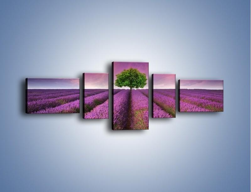 Obraz na płótnie – Droga lawendową do drzewa – pięcioczęściowy KN1158AW6