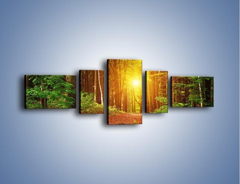 Obraz na płótnie – Polski krajobraz leśny – pięcioczęściowy KN1257AW6