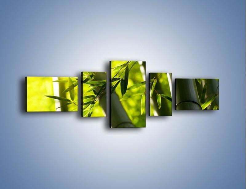 Obraz na płótnie – Twarde łodygi bambusa – pięcioczęściowy KN1314AW6