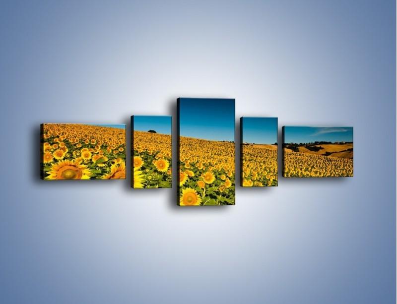 Obraz na płótnie – Słonecznikowe uśmiechnięte główki – pięcioczęściowy KN205W6