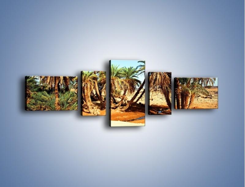 Obraz na płótnie – Palmowa rodzina w komplecie – pięcioczęściowy KN809W6