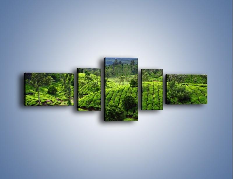 Obraz na płótnie – Rozległa zielona kraina – pięcioczęściowy KN872W6