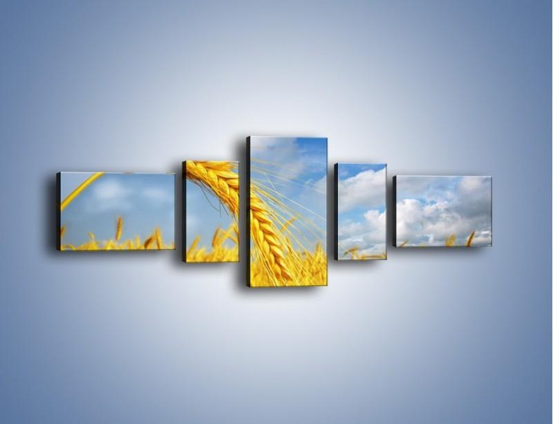 Obraz na płótnie – Pole pełne złota – pięcioczęściowy KN962W6