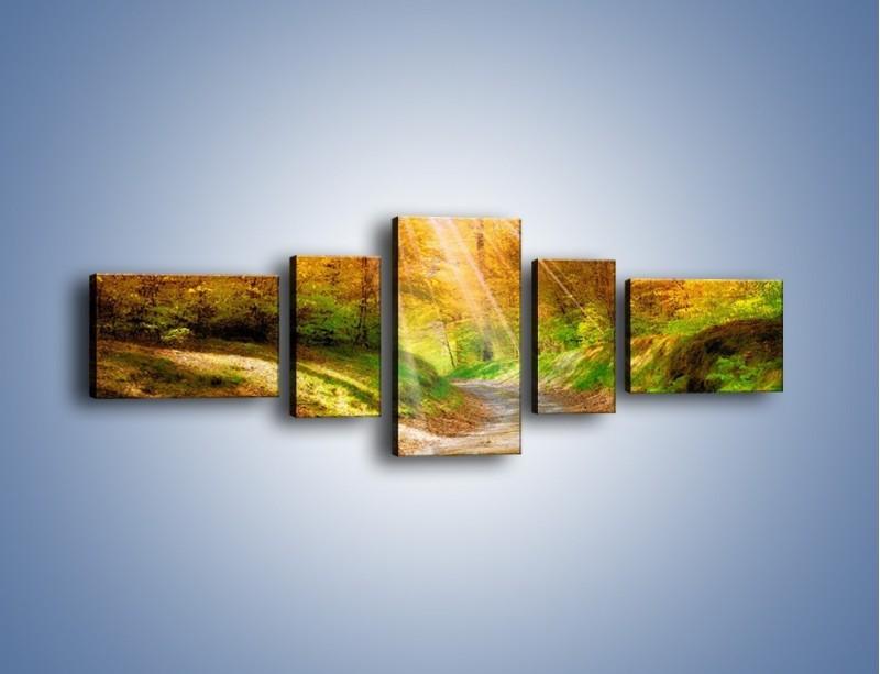Obraz na płótnie – Promienną i słoneczną ścieżką przez las – pięcioczęściowy KN989W6