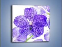 Obraz na płótnie – Jasny fiolet rządzi w kwiatach – jednoczęściowy kwadratowy K259