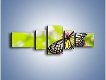 Obraz na płótnie – Motyl w letni poranek – pięcioczęściowy Z004W6