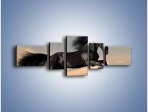 Obraz na płótnie – Czarny koń w galopie – pięcioczęściowy Z008W6
