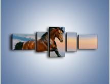 Obraz na płótnie – Brązowy koń na pustyni – pięcioczęściowy Z011W6