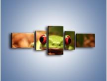 Obraz na płótnie – Bystre oczka małej żabki – pięcioczęściowy Z023W6