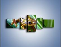 Obraz na płótnie – Kolorowy płaz na liściu – pięcioczęściowy Z026W6