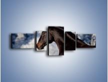 Obraz na płótnie – Brązowy ogier na zimowym spacerze – pięcioczęściowy Z056W6