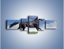 Obraz na płótnie – Dziki koń w biegu – pięcioczęściowy Z194W6