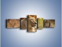 Obraz na płótnie – Lwie zaloty – pięcioczęściowy Z204W6