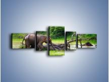 Obraz na płótnie – Kąpiel ze słoniem – pięcioczęściowy Z216W6