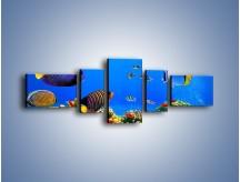 Obraz na płótnie – Kolory tęczy pod wodą – pięcioczęściowy Z220W6