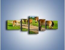 Obraz na płótnie – Konie z gospodarstwa – pięcioczęściowy Z242W6