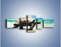 Obraz na płótnie – Jak tu nie kochać żółwi – pięcioczęściowy Z251W6