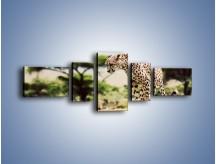 Obraz na płótnie – Cała zwinność geparda – pięcioczęściowy Z315W6