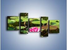 Obraz na płótnie – Ciemno-różowy nenufar na wodzie – pięcioczęściowy K014W7