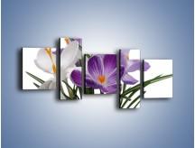Obraz na płótnie – Biało-fioletowe krokusy – pięcioczęściowy K020W7
