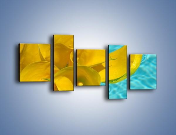 Obraz na płótnie – Żółte kalie na wodzie – pięcioczęściowy K082W7