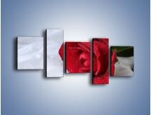 Obraz na płótnie – Bordowa róża na białej pościeli – pięcioczęściowy K1023W7