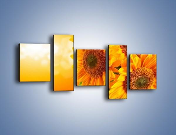 Obraz na płótnie – Słonecznik o wschodzie słońca – pięcioczęściowy K109W7