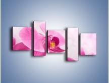 Obraz na płótnie – Ciemny róż w storczyku – pięcioczęściowy K588W7
