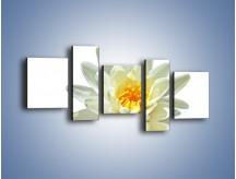 Obraz na płótnie – Biel z pomarańczą w kwiecie – pięcioczęściowy K674W7