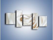 Obraz na płótnie – Biel róży za dnia – pięcioczęściowy K709W7