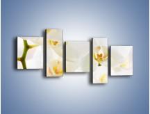 Obraz na płótnie – Białe storczyki blisko siebie – pięcioczęściowy K811W7