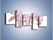 Obraz na płótnie – Cieniutkie gałązki storczyków – pięcioczęściowy K813W7