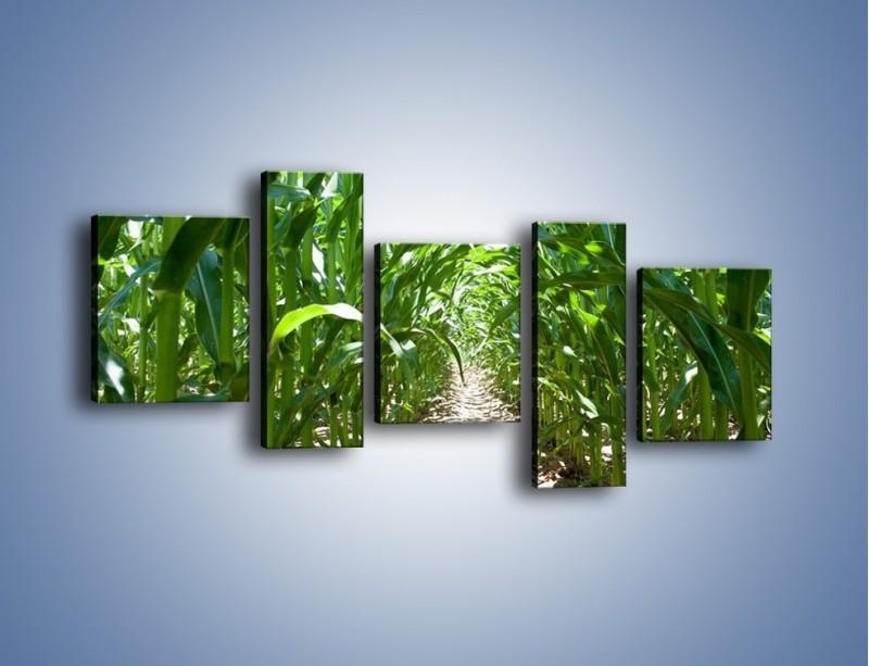 Obraz na płótnie – Labirynt z łodyg – pięcioczęściowy KN036W7