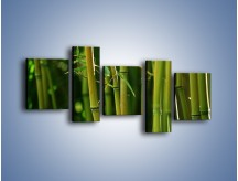 Obraz na płótnie – Bambusowe łodygi z bliska – pięcioczęściowy KN118W7