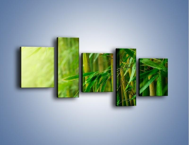 Obraz na płótnie – Bambus w roli głównej – pięcioczęściowy KN1202AW7