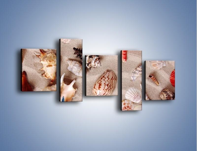Obraz na płótnie – Kolorowe skorupiaki – pięcioczęściowy KN1214AW7