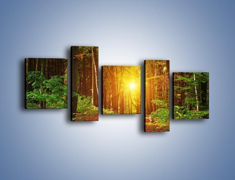 Obraz na płótnie – Polski krajobraz leśny – pięcioczęściowy KN1257AW7