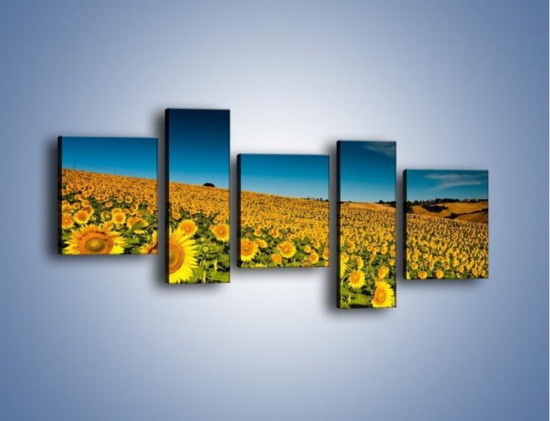 Obraz na płótnie – Słonecznikowe uśmiechnięte główki – pięcioczęściowy KN205W7