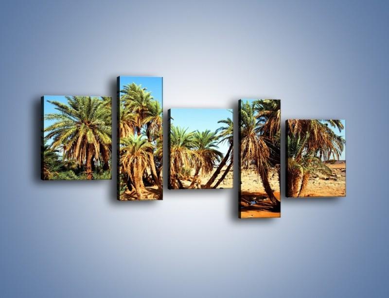 Obraz na płótnie – Palmowa rodzina w komplecie – pięcioczęściowy KN809W7