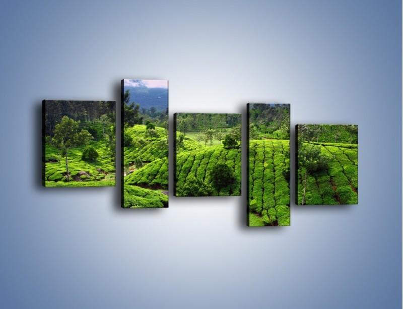 Obraz na płótnie – Rozległa zielona kraina – pięcioczęściowy KN872W7