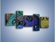 Obraz na płótnie – Kropelki na pawim oku – pięcioczęściowy O047W7