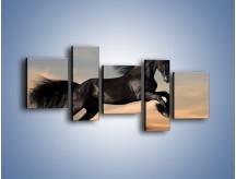 Obraz na płótnie – Czarny koń w galopie – pięcioczęściowy Z008W7