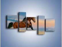 Obraz na płótnie – Brązowy koń na pustyni – pięcioczęściowy Z011W7