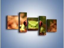 Obraz na płótnie – Bystre oczka małej żabki – pięcioczęściowy Z023W7