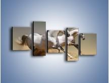 Obraz na płótnie – Białe konie w pustynnym galopie – pięcioczęściowy Z055W7