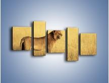 Obraz na płótnie – Czujny wzrok lwicy – pięcioczęściowy Z091W7