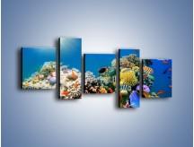 Obraz na płótnie – Fauna i kolorowi towarzysze – pięcioczęściowy Z116W7